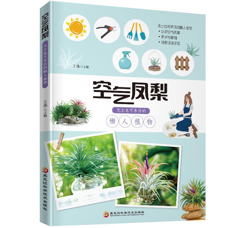 《空气凤梨:无土也可养活的懒人植物》