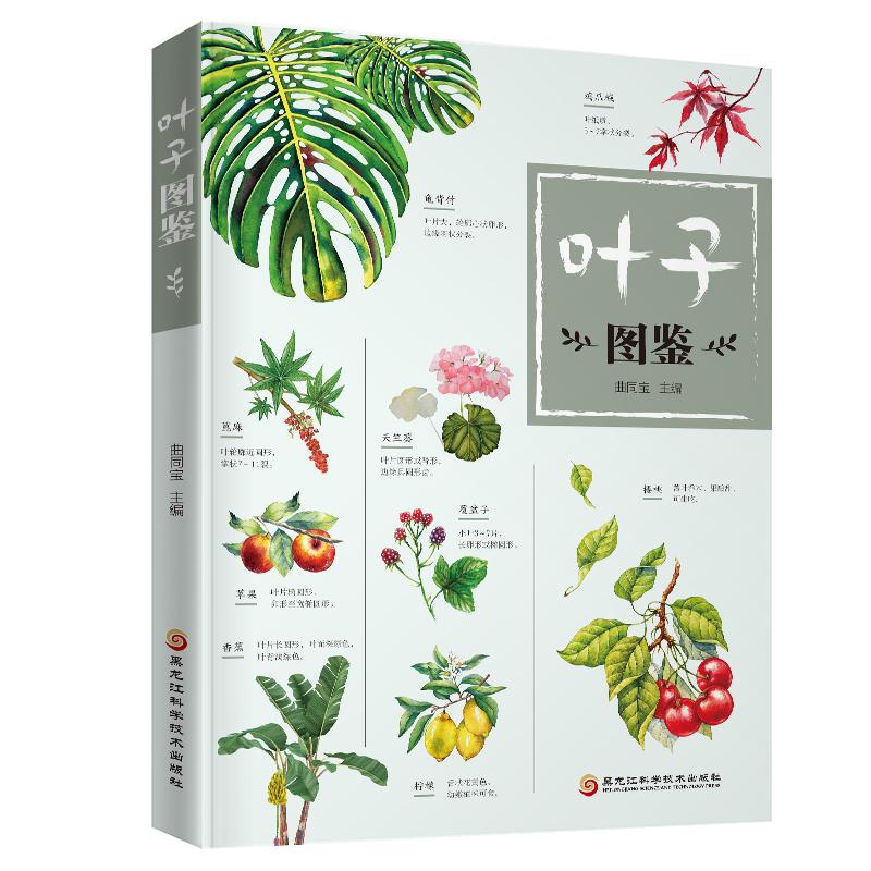 《叶子图鉴》(本书将带你鉴赏各种各样的植物叶子!)